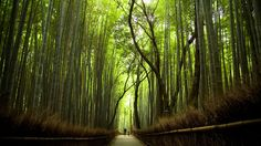 Bamboo Forest, Japan  This historic sight, called Arashiyama, is different than your typical forest. Rather than being full of lush trees, it's full of bamboo. The forest has a bridge going throughout it so tourists can walk through and enjoy the unique beauty.