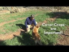 Use Cover Crops in your Vegetable Garden to Grow Food Well! Starting A Vegetable Garden, Soil Improvement, Garden Soil, Growing Vegetables, Permaculture, Wells, The Great Outdoors, Organic Gardening, Cover