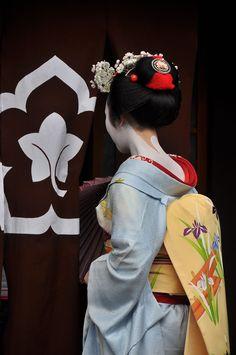 舞妓 / Maiko