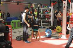 Cologne, Bodybuilding, Muscle, Treadmill, Fitness, Gym Equipment, Bike, Sports, Bicycle