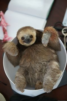 PHOTO: A Sloth In A Bowl!