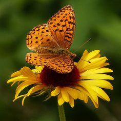 #putdownyourphone #awesome #butterfly #beautiful nature #colour #amazing