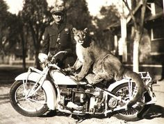 puma on a motorcycle