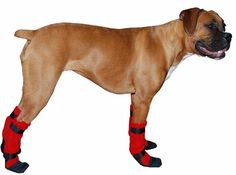 BOXER dog booties. Perfect for taking the dogs out when it's wet outside!!