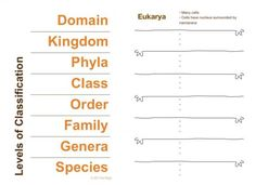 Printables Taxonomy Classification Worksheet science stuff teaching classification and taxonomy fun i introduce the topic of scientific how to use a dichotomous key