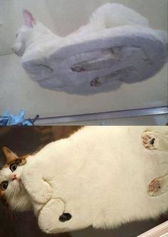 What a cat looks like from under glass.