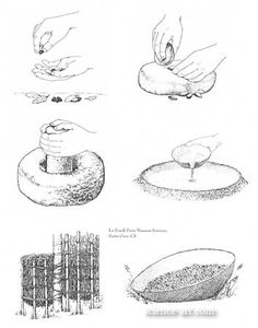 Acorn use by California native Americans - Illustration@Science-Art.Com