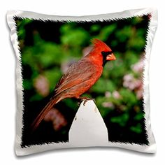 3dRose Danita Delimont  Cardinal  Northern Cardinal male on picket fence near Dwarf Korean Lilac  16x16 inch Pillow Case pc_250952_1 *** See this great product.