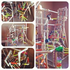 DIY PVC Bird Gym