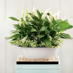 4 durable indoor plants for your home