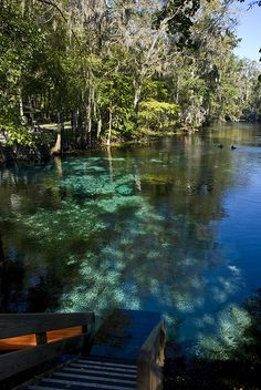 Ginnie Springs in Florida / USA (by Charlie Pfeifler). (It's a beautiful world) Vacation Places, Places To Travel, Places To See, Travel Destinations, Old Florida, Florida Usa, Florida Maps, Gainesville Florida, Ginnie Springs Florida
