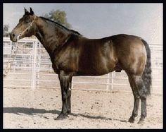 Doc O'Lena My horse's Grand Sire.