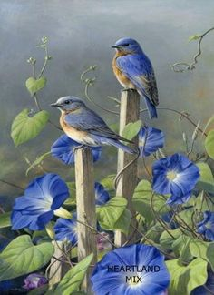 Ideas painting love birds bluebirds for 2019 Pretty Birds, Love Birds, Beautiful Birds, Beautiful Images, Beautiful Family, Simply Beautiful, Animals And Pets, Cute Animals, Images Vintage