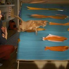 Something fishy + catty Cat + Fishes . RP @francois.vogel . . . . . . #distortion #slicetime #slitscan #spacetime #cat #fish #videoart #videoartist #newmedia #newmediaart #newmediaartist #digitalart #contemporaryart #contemporaryartist #digitalartist #art #artist #artwork #cats #catsofinstagram #lechat #leschats