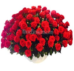 Bulk Roses, Wholesale Roses, Diy Wedding Flowers, Rose Flowers, Blossoms, Christmas Wreaths, Wedding Decorations, Delivery, Fresh