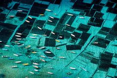 canoes over seaweed farms