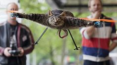 Kitty Hawk: Flying Feline Enjoys An Uplifting Afterlife As A Helicopter ...  ... PetsLady.com