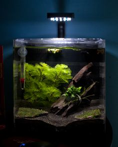 "4 gallon tank, Oceanic Systems, Inc. Evolve 4 - LED Light Aquarium Kit, aprox $55: good betta tank, live plants, 2"" of Black Blasting Sand, Flora - Anubias Nana Petite, Green Cabomba, Mini X-Mas Moss, Pumpkin Shrimp, driftwood. Your betta will display beautiful swimming, flaring and exploring behavior in these larger tanks that you may not see when they are kept in smaller habitats."