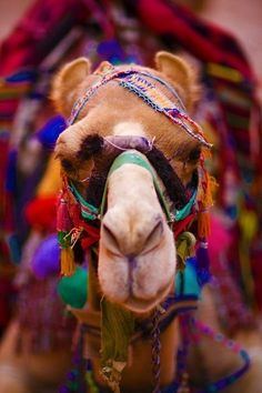 Colourful camel ........if only I knew someone with a camel for hire.....