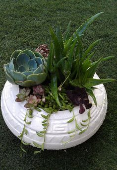 My #Goodwill SW style container (afetr painting) + first succulant garden by NYCLQ via Flickr