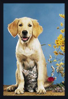 Quadro Decorativo Poster Pets Cachorro e Gato 64x94cm - Decore Pronto  Moldura Preta 379ca55ddbd61