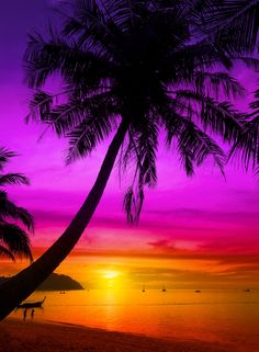 Palm tree silhouette on tropical beach at sunset.