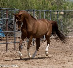 (89) Arizona Horse Photography - Photos