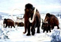 Wooly Mammoths - snow, extinct, wooly mammoths, ice