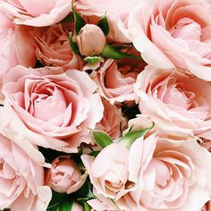 stylishblogger:   Up close and personal #pinkroses...
