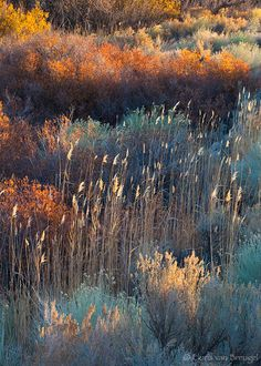 Dancing in the Sun : Owens Valley, CA Landscape Art, Landscape Architecture, Landscape Paintings, Landscape Design, Landscape Photography, Garden Design, Nature Photography, Watercolor Landscape, Nature Aesthetic