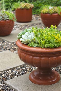 Ok, you probably have already figured out that we have an undying love for succulents. They are one of the gardening's hottest trends for 2015 after all. Actually, we think they have always been trendy and always will be. How can you not love this little cuties when they are not only adorable, but so easy to grow. Succulents require minimal conditions and minimal care, not to mention they can grow in a really limited space with very little soil which makes them perfect for very small gardens or balconies.