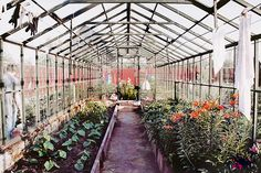 Commercial Greenhouse.  A wonderful place to work.  Just like heaven.