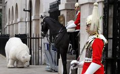A horse from the Household Calvary looks at a human-operated polar bear puppet  on Whitehall in London, as Greenpeace launch their Arctic Rising campaign