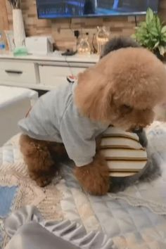 Cute Baby Dogs, Cute Funny Dogs, Cute Dogs And Puppies, Cute Funny Animals, Cute Babies, Cute Funny Baby Videos, Baby Animals Pictures, Cute Animal Pictures, Cute Animal Videos