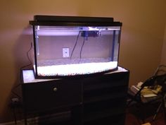 Before I added anything to my new 45 gallon bow front aquarium!