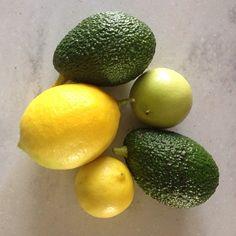 """Organic #BigSur backyard garden booty"""