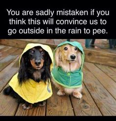 At least these Dachshunds were smart enuf to put on raincoats!