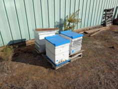 Moving Bees