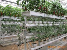 现代农业_现代农业 立体设施种植 蔬菜瓜果观光采摘园 工程设计建造安装 - 阿里巴巴