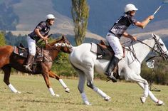 Play polocrosse in New Zealand