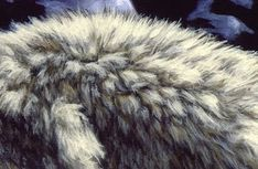 Painting fur - How to Paint Different Kinds of Animal Fur – Painting fur Acrylic Painting Techniques, Painting Videos, Painting Lessons, Art Techniques, Painting Tips, Art Lessons, Painting Fur, Texture Painting, Painting & Drawing