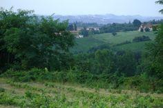 Vigne in Langa