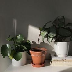 new ideas nature color interior bedrooms Plant Aesthetic, Aesthetic Rooms, Aesthetic Photo, Aesthetic Pictures, Plants Are Friends, Houseplants, Aesthetic Wallpapers, Planting Flowers, Flora