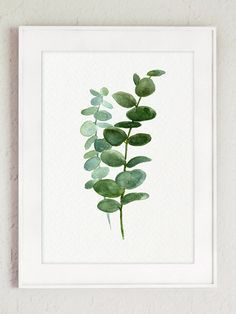 Silver Dollar Eucalyptus Leaves Green Blue Leaf Watercolor Painting, Botanical Kitchen Illustration Wall Poster Living Room Plant Decoration - All About Botanical Art, Botanical Illustration, Botanical Kitchen, Botanical Posters, House Illustration, Illustrations, Watercolor Flowers, Watercolor Art, Green Watercolor
