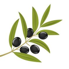 Illustration about Black olives on branch, detailed vector illustration. Illustration of leaf, vegetarian, white - 5610534 Branch Vector, Flower Clipart, Olive Tree, Glass Design, Wall Design, Ceramic Painting, Botanical Illustration, Fused Glass, Painted Rocks