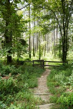 Shared borders & easy access to Sam Houston National Forest. U.s. States, United States, George Bush Intercontinental Airport, Sam Houston, Lots For Sale, Come And See, National Forest, Easy Access, New Mexico
