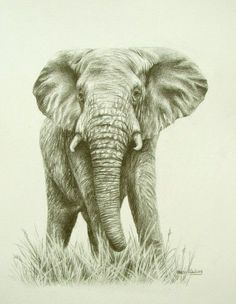 Elephant: very well done drawing!
