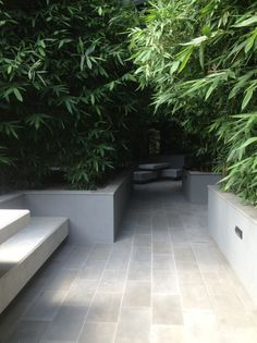 Rendered walls with stretcher bond pattern paving. Hard forms in light colours contrast beautifully against the leaf texture of the bamboo. Pinned onto Garden Design by Darin Bradbury.