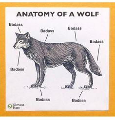 fbda26814d3fe4a8aac8c9fe44dd9114 black bear body diagram bear anatomy diagram second animal