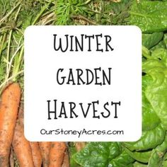 9 crops you can plant in August for fall and winter harvest - Our Stoney Acres There are over 30 different crops you can plant in August. I am going to focus on the 9 crops you can plant in August that are the base fall & winter crops.